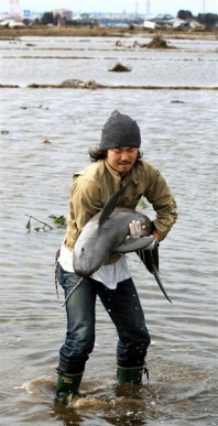 Dolphin rescued from Tsunami in Japan