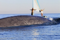 Crew of TransparentSea environmental voyage enjoy a blue whale visitation off the coast of California.